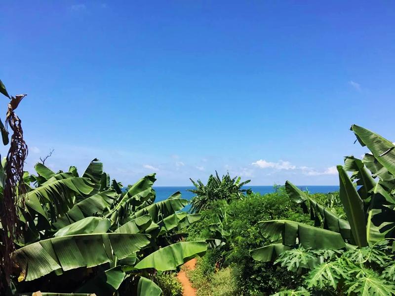 如果你在涠洲岛看过大片被香蕉林染成绿色的土地,看过土地上朴实的