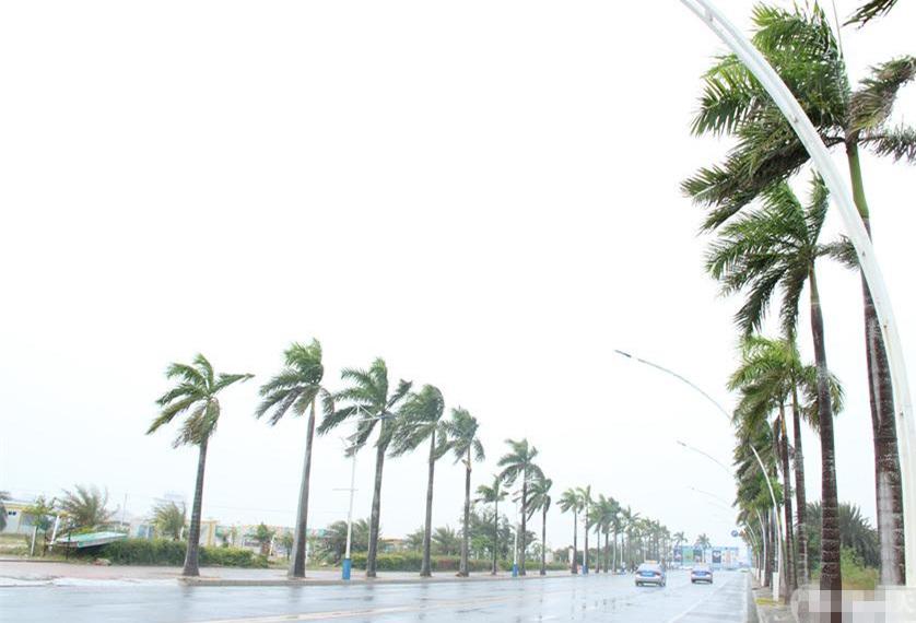广西北海旅行社,台风