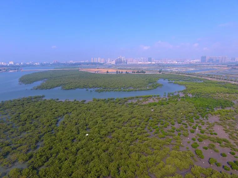 """广西北海滨海国家湿地公园管理处 荣获""""全国"""