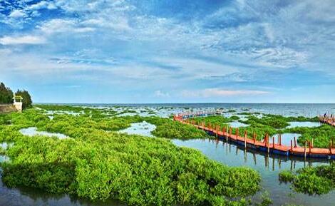 北海银滩,大江埠,金湾红树林一日游